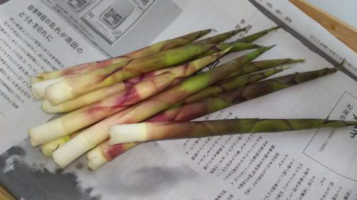 根曲がり竹の味噌汁を食べよう!